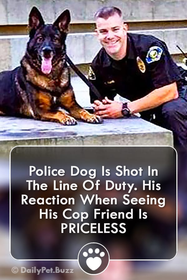 Police Dog Is Shot In The Line Of Duty. His Reaction When Seeing His Cop Friend Is PRICELESS