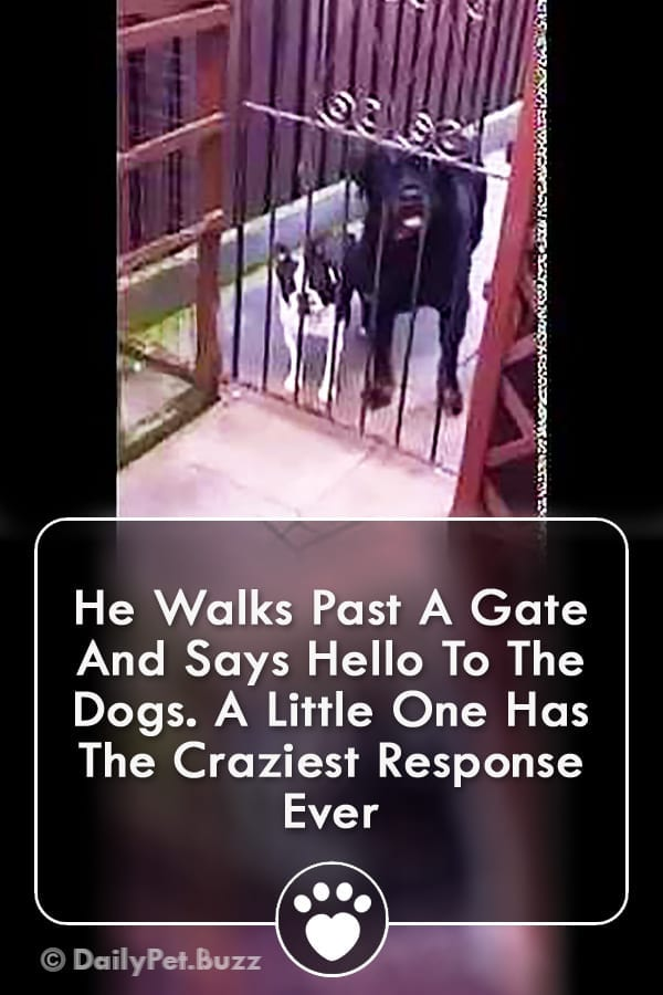 He Walks Past A Gate And Says Hello To The Dogs. A Little One Has The Craziest Response Ever