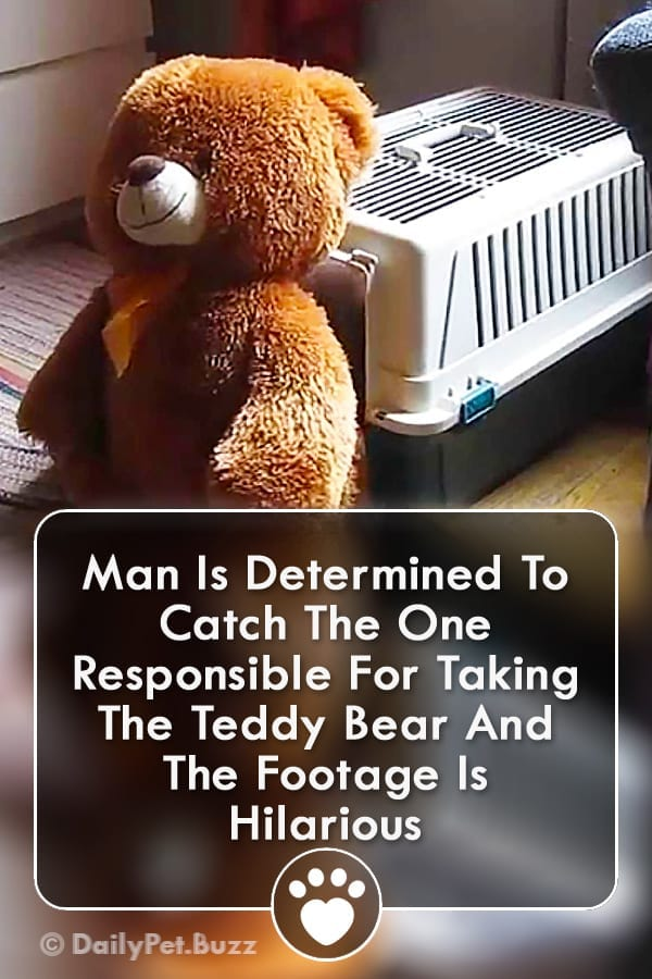 Man Is Determined To Catch The One Responsible For Taking The Teddy Bear And The Footage Is Hilarious