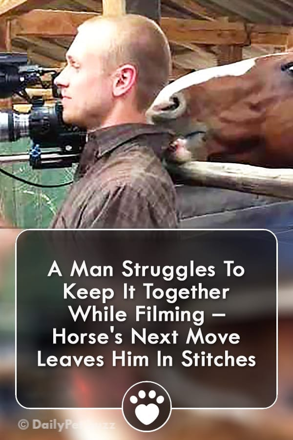 A Man Struggles To Keep It Together While Filming – Horse\'s Next Move Leaves Him In Stitches