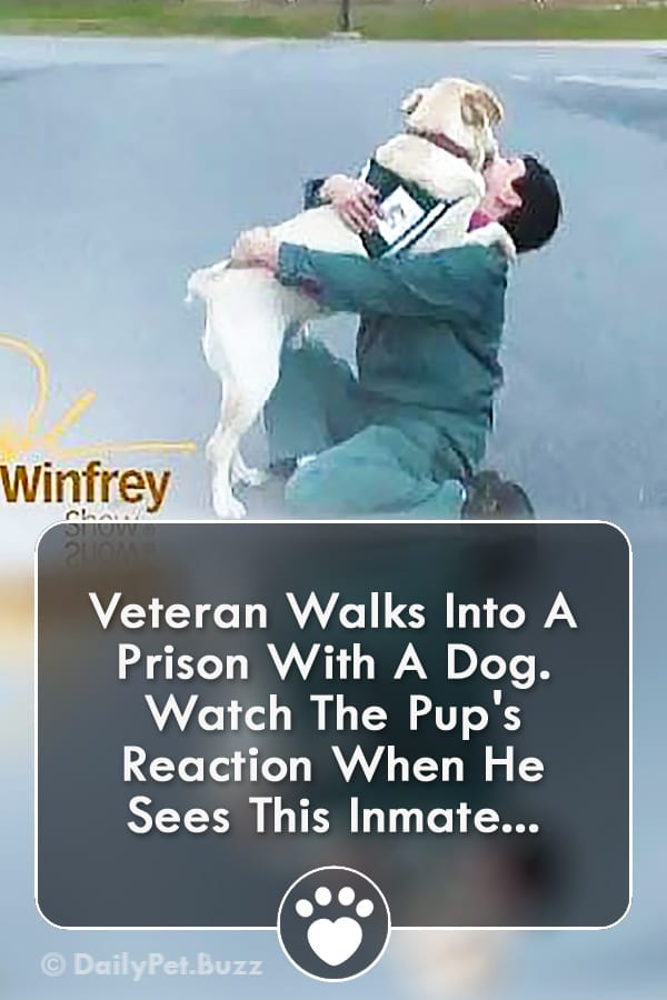 Veteran Walks Into A Prison With A Dog. Watch The Pup\'s Reaction When He Sees This Inmate...