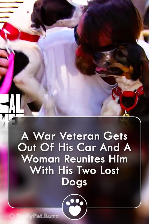 A War Veteran Gets Out Of His Car And A Woman Reunites Him With His Two Lost Dogs