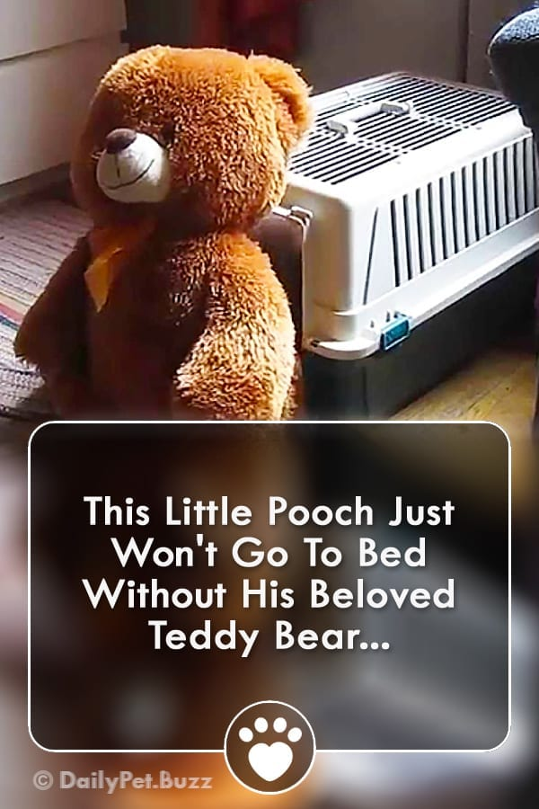 This Little Pooch Just Won\'t Go To Bed Without His Beloved Teddy Bear...