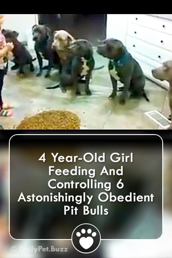 4 Year-Old Girl Feeding And Controlling 6 Astonishingly Obedient Pit Bulls
