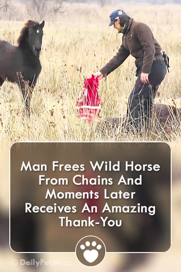 Man Frees Wild Horse From Chains And Moments Later Receives An Amazing Thank-You