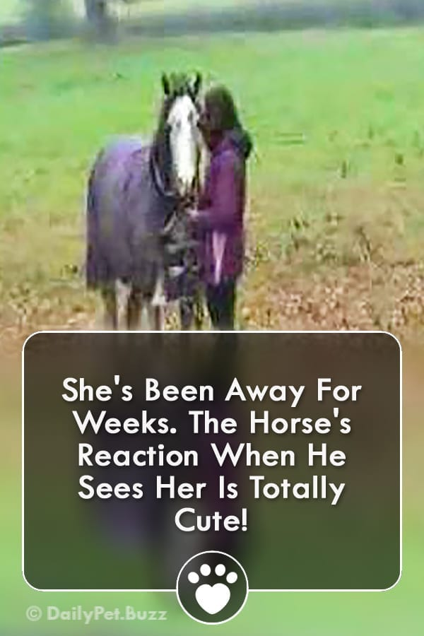 She\'s Been Away For Weeks. The Horse\'s Reaction When He Sees Her Is Totally Cute!