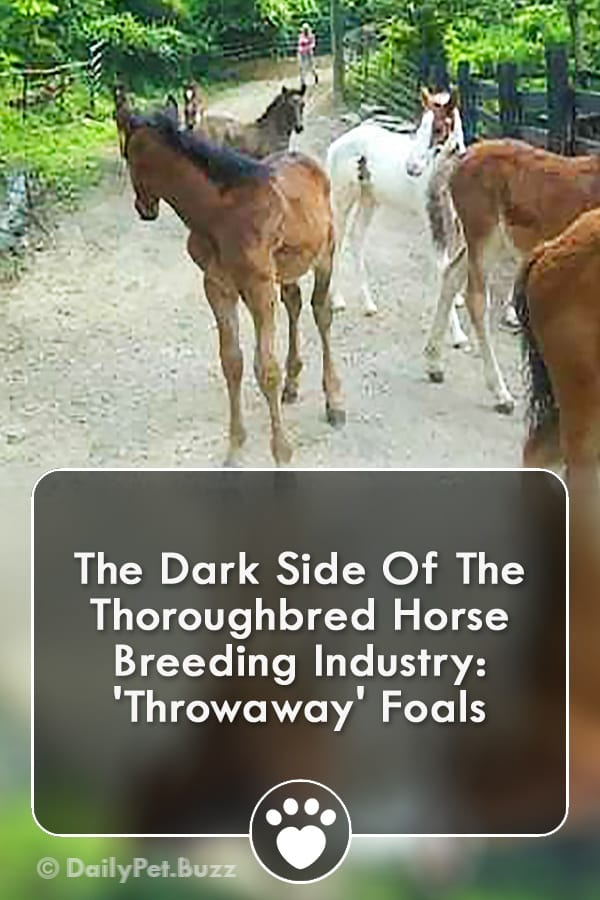 The Dark Side Of The Thoroughbred Horse Breeding Industry: \'Throwaway\' Foals