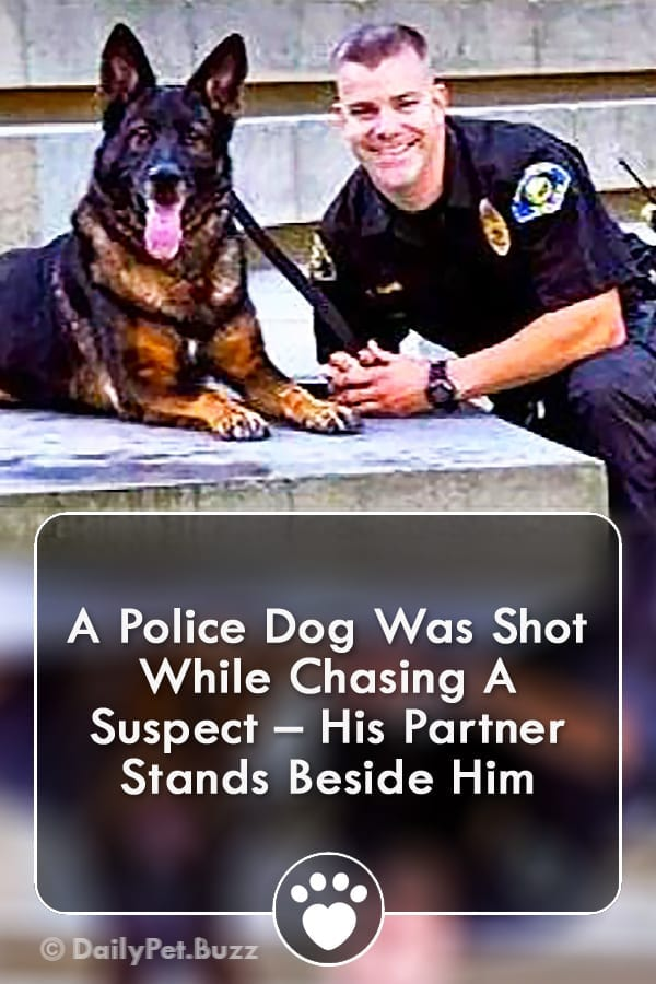 A Police Dog Was Shot While Chasing A Suspect – His Partner Stands Beside Him