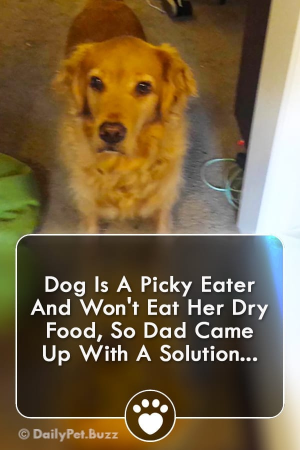 Dog Is A Picky Eater And Won\'t Eat Her Dry Food, So Dad Came Up With A Solution...