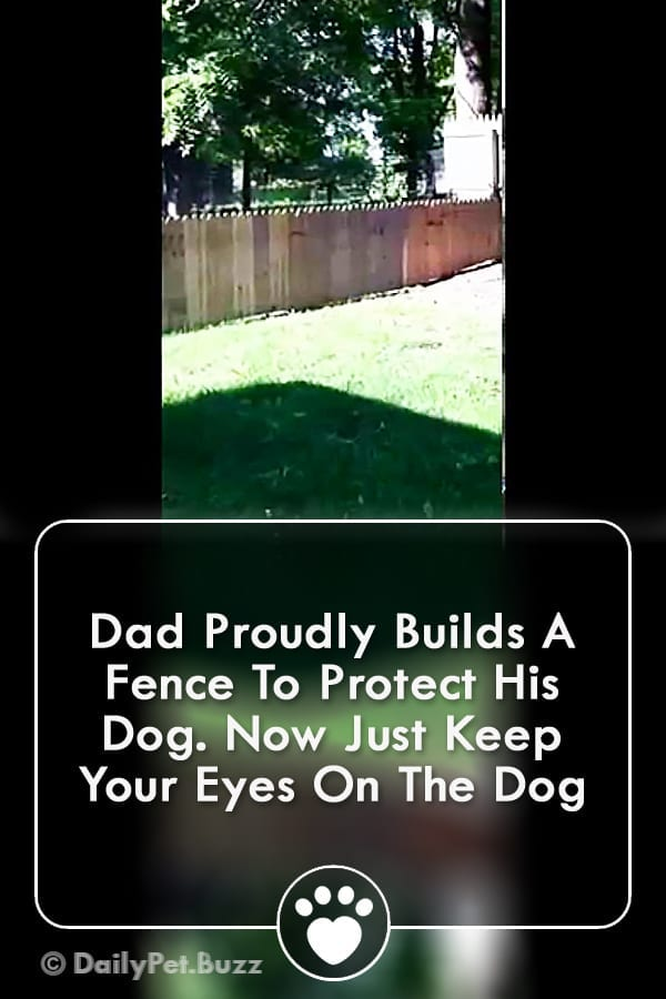 Dad Proudly Builds A Fence To Protect His Dog. Now Just Keep Your Eyes On The Dog
