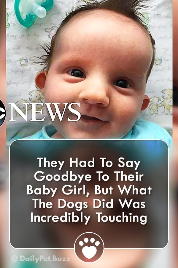 They Had To Say Goodbye To Their Baby Girl, But What The Dogs Did Was Incredibly Touching