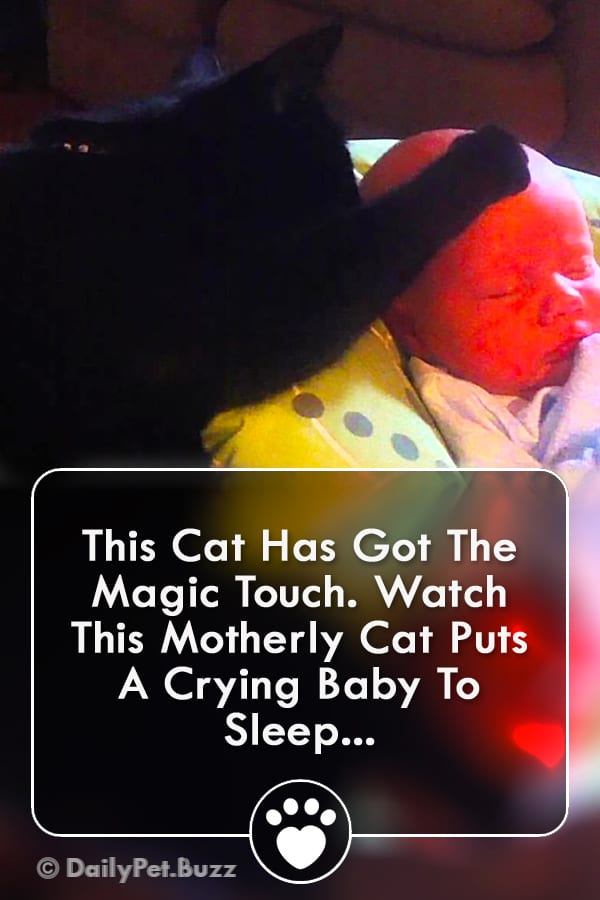 This Cat Has Got The Magic Touch. Watch This Motherly Cat Puts A Crying Baby To Sleep...