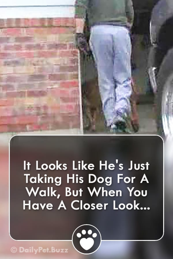 It Looks Like He\'s Just Taking His Dog For A Walk, But When You Have A Closer Look...