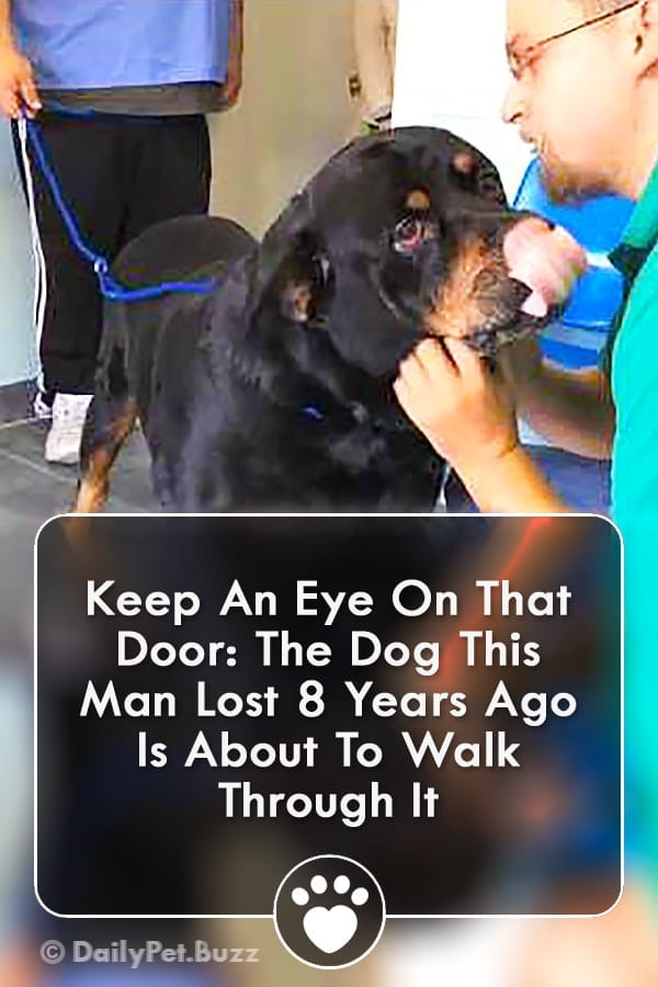 Keep An Eye On That Door: The Dog This Man Lost 8 Years Ago Is About To Walk Through It