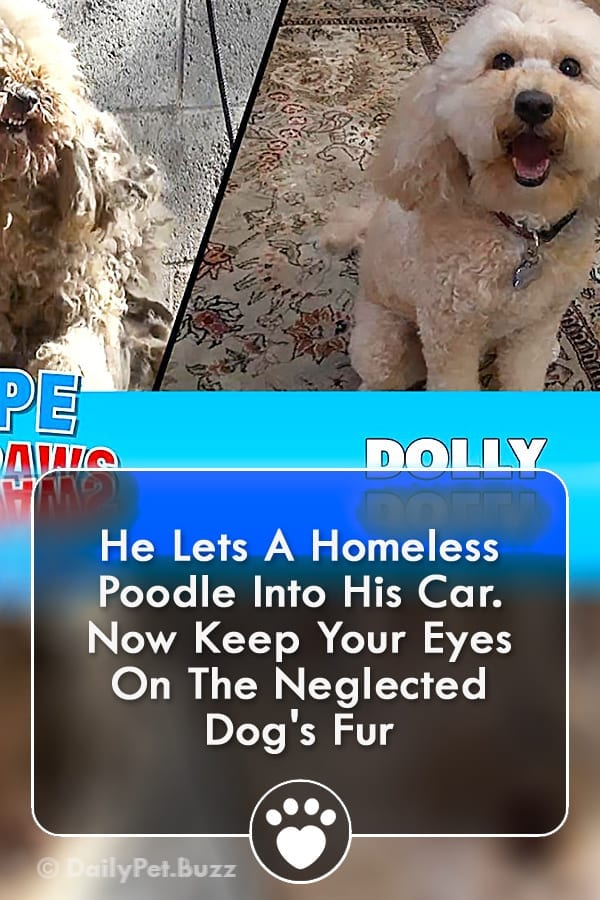 He Lets A Homeless Poodle Into His Car. Now Keep Your Eyes On The Neglected Dog\'s Fur