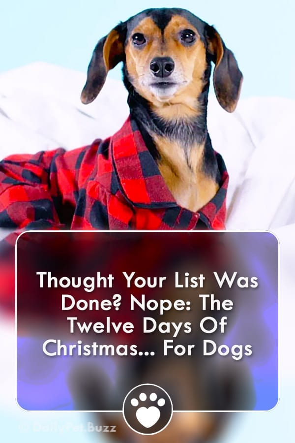 Thought Your List Was Done? Nope: The Twelve Days Of Christmas... For Dogs