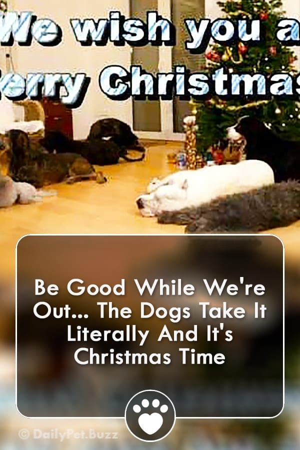Be Good While We\'re Out... The Dogs Take It Literally And It\'s Christmas Time