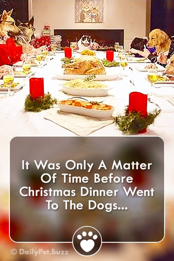 It Was Only A Matter Of Time Before Christmas Dinner Went To The Dogs...