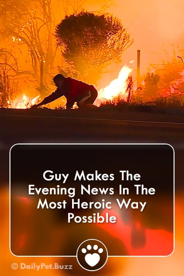 Guy Makes The Evening News In The Most Heroic Way Possible