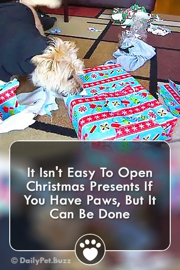 It Isn\'t Easy To Open Christmas Presents If You Have Paws, But It Can Be Done
