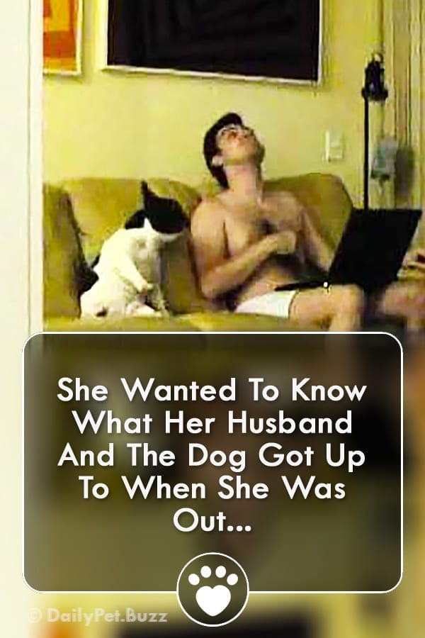 She Wanted To Know What Her Husband And The Dog Got Up To When She Was Out...