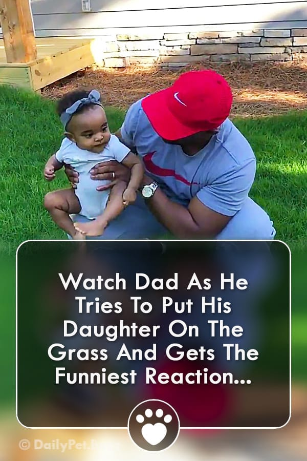Watch Dad As He Tries To Put His Daughter On The Grass And Gets The Funniest Reaction...