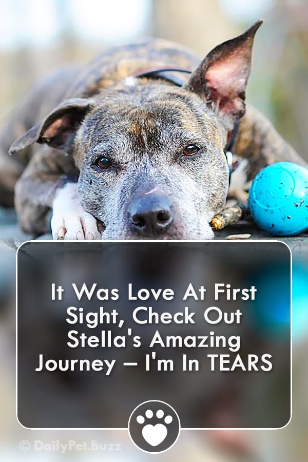 It Was Love At First Sight, Check Out Stella\'s Amazing Journey – I\'m In TEARS