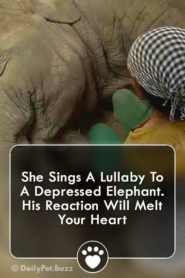 She Sings A Lullaby To A Depressed Elephant. His Reaction Will Melt Your Heart