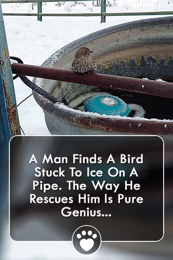 A Man Finds A Bird Stuck To Ice On A Pipe. The Way He Rescues Him Is Pure Genius...
