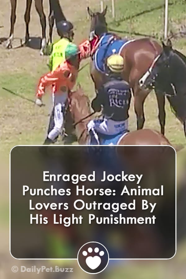 Enraged Jockey Punches Horse: Animal Lovers Outraged By His Light Punishment