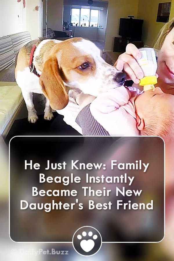 He Just Knew: Family Beagle Instantly Became Their New Daughter\'s Best Friend