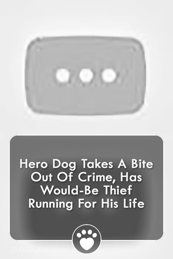 Hero Dog Takes A Bite Out Of Crime, Has Would-Be Thief Running For His Life