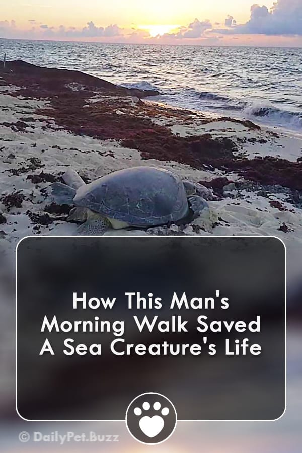 How This Man\'s Morning Walk Saved A Sea Creature\'s Life