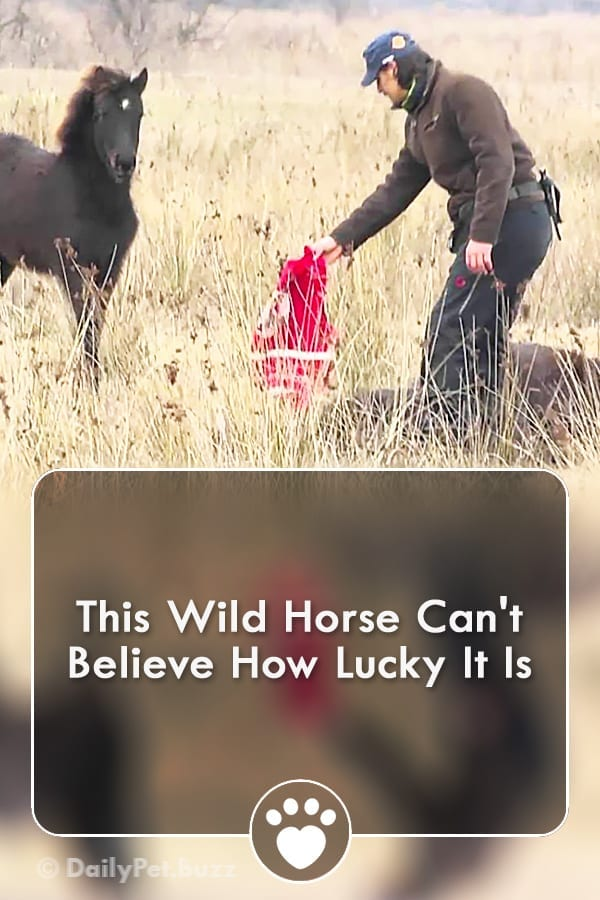 This Wild Horse Can\'t Believe How Lucky It Is