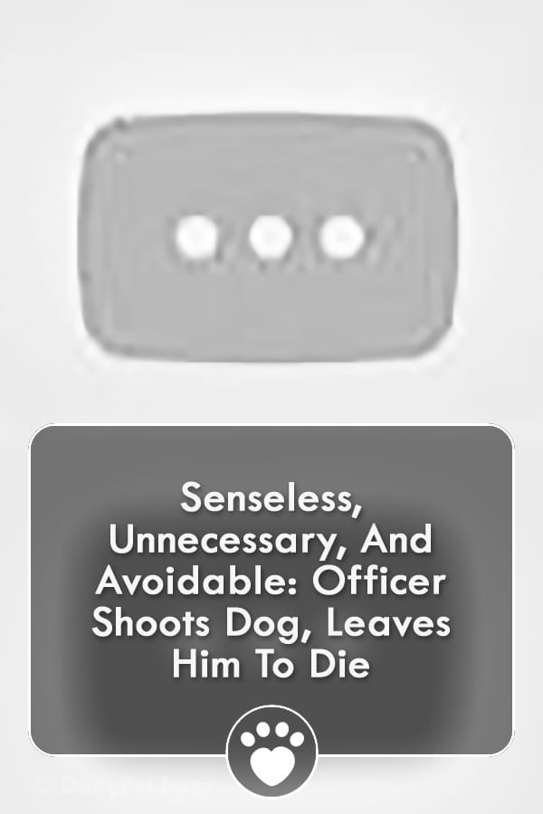 Senseless, Unnecessary, And Avoidable: Officer Shoots Dog, Leaves Him To Die