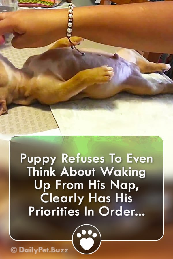 Puppy Refuses To Even Think About Waking Up From His Nap, Clearly Has His Priorities In Order...