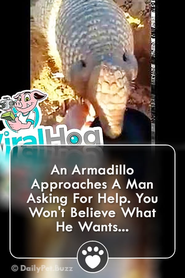 An Armadillo Approaches A Man Asking For Help. You Won\'t Believe What He Wants...