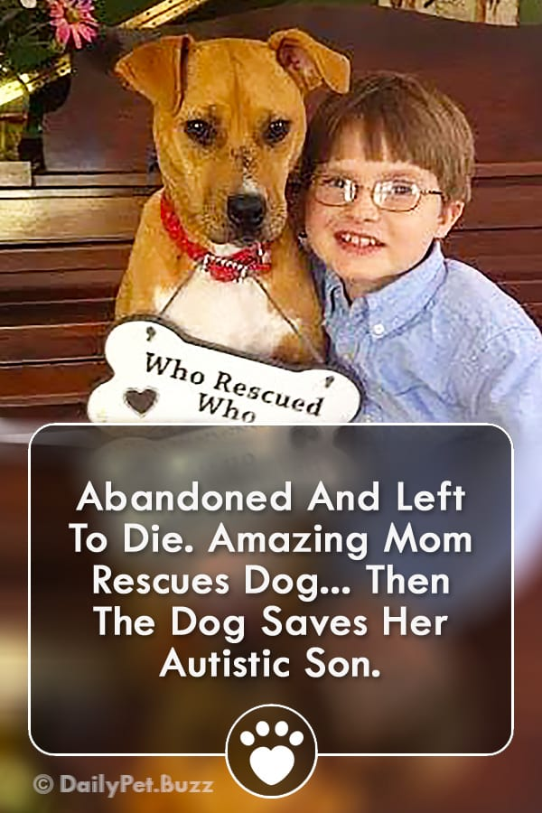 Abandoned And Left To Die. Amazing Mom Rescues Dog... Then The Dog Saves Her Autistic Son.