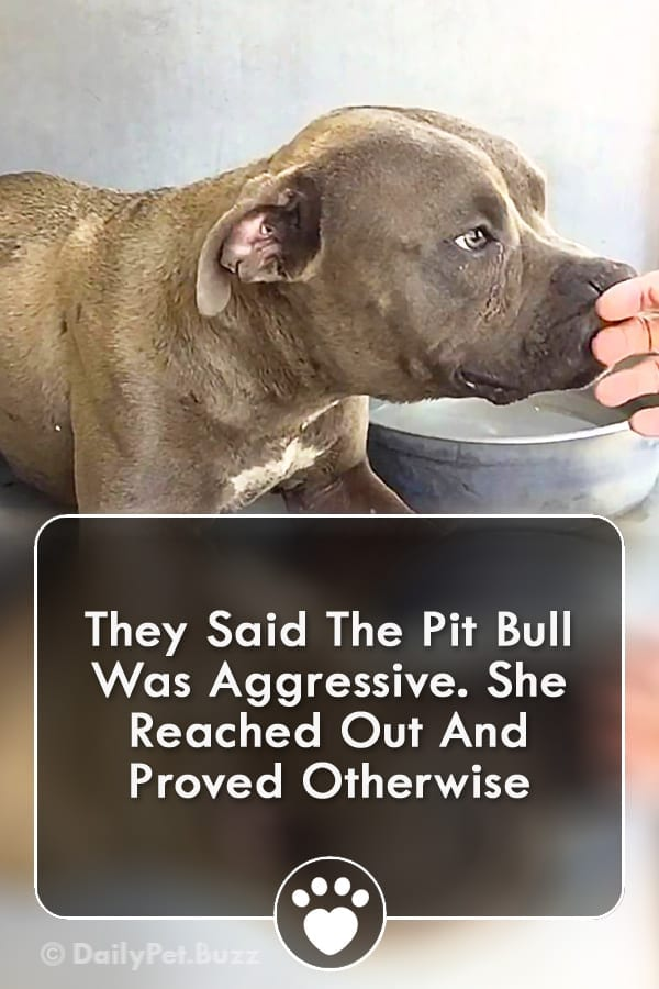 They Said The Pit Bull Was Aggressive. She Reached Out And Proved Otherwise