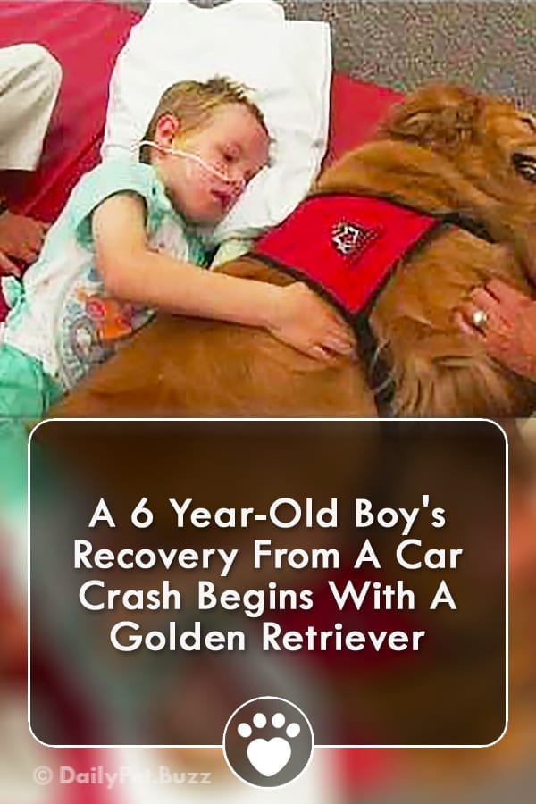 A 6 Year-Old Boy\'s Recovery From A Car Crash Begins With A Golden Retriever