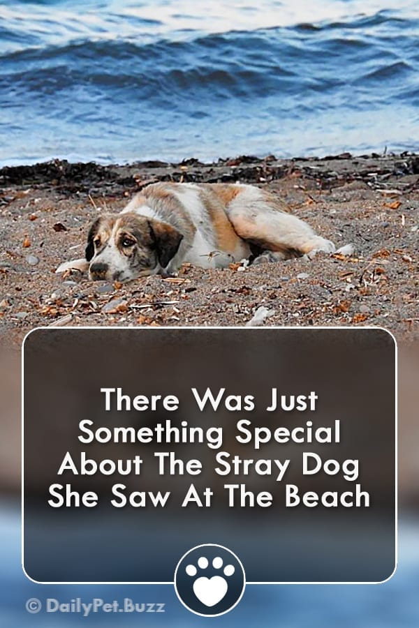 There Was Just Something Special About The Stray Dog She Saw At The Beach