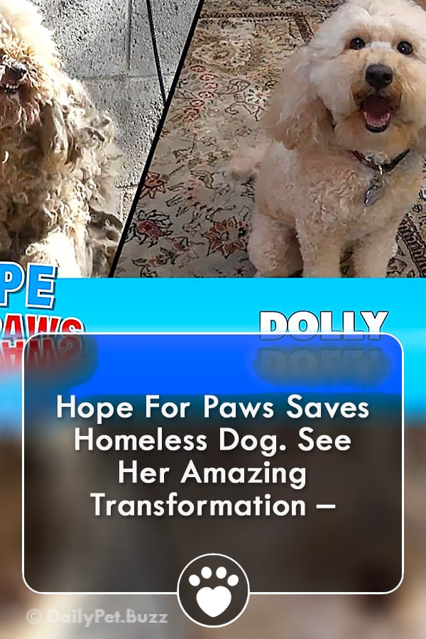 Hope For Paws Saves Homeless Dog. See Her Amazing Transformation –