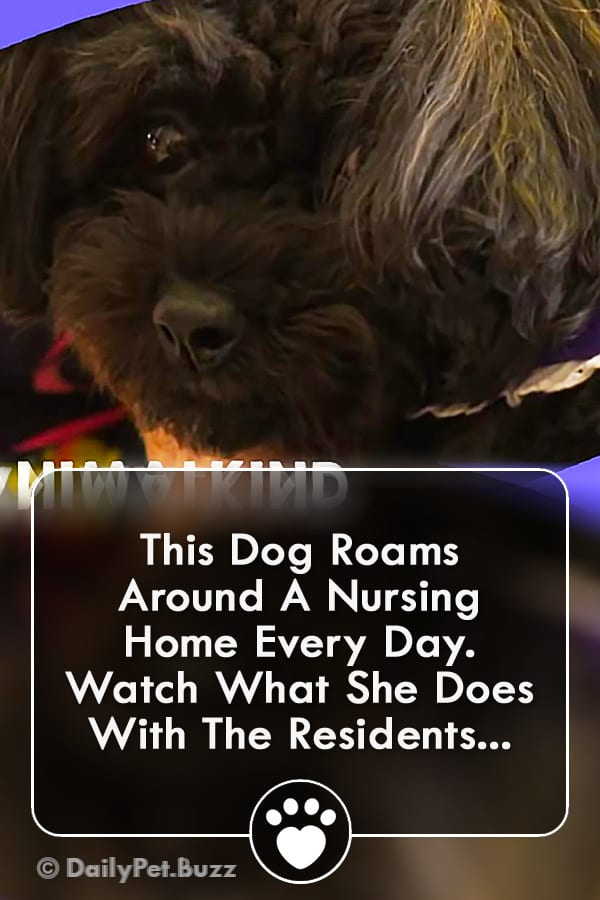 This Dog Roams Around A Nursing Home Every Day. Watch What She Does With The Residents...