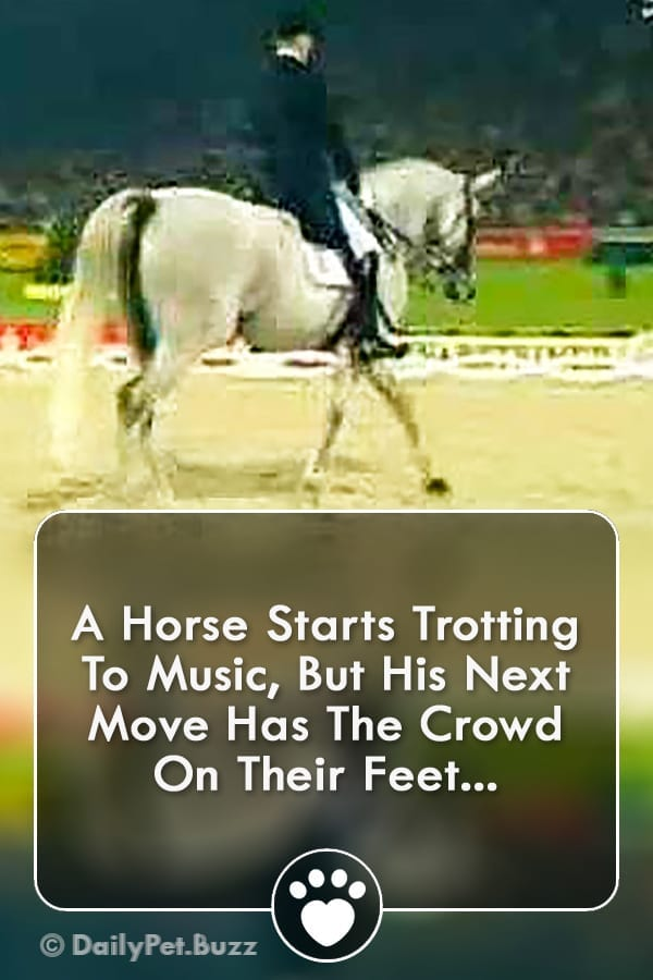 A Horse Starts Trotting To Music, But His Next Move Has The Crowd On Their Feet...