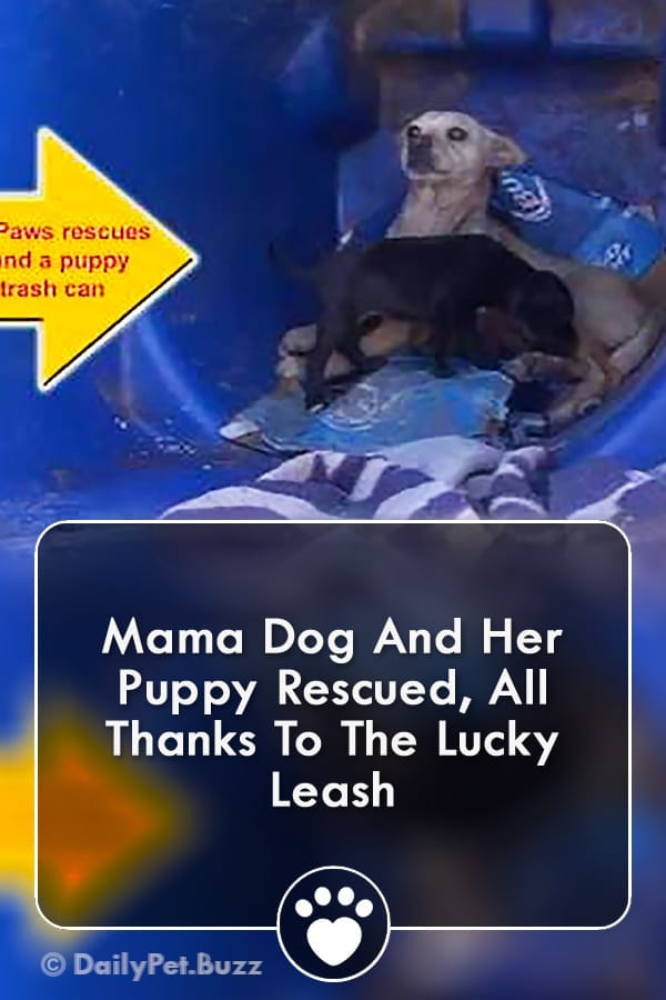 Mama Dog And Her Puppy Rescued, All Thanks To The Lucky Leash
