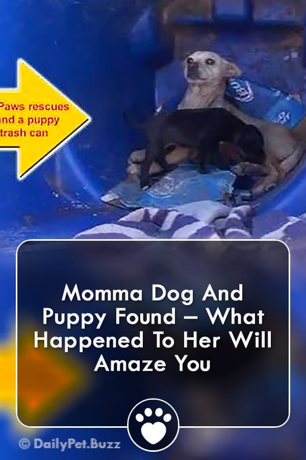 Momma Dog And Puppy Found – What Happened To Her Will Amaze You