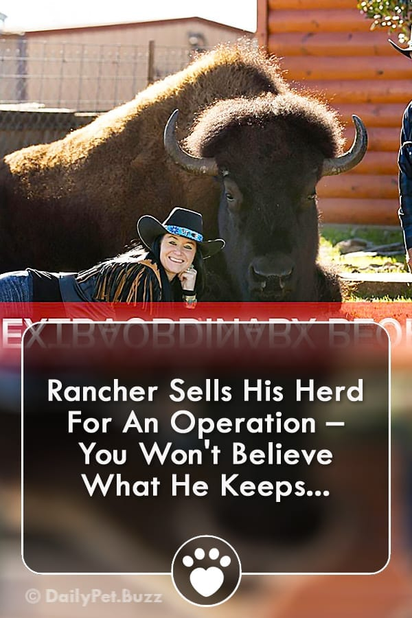 Rancher Sells His Herd For An Operation – You Won\'t Believe What He Keeps...
