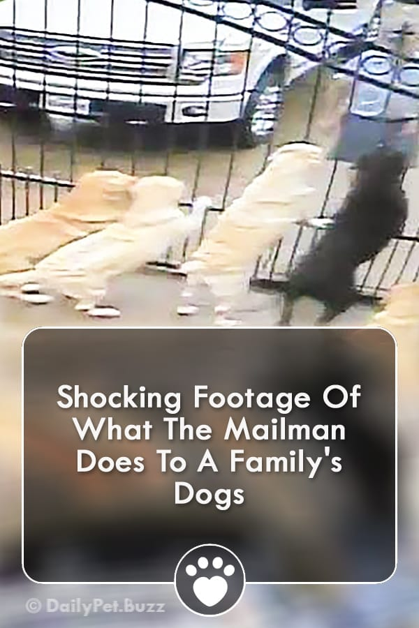 Shocking Footage Of What The Mailman Does To A Family\'s Dogs