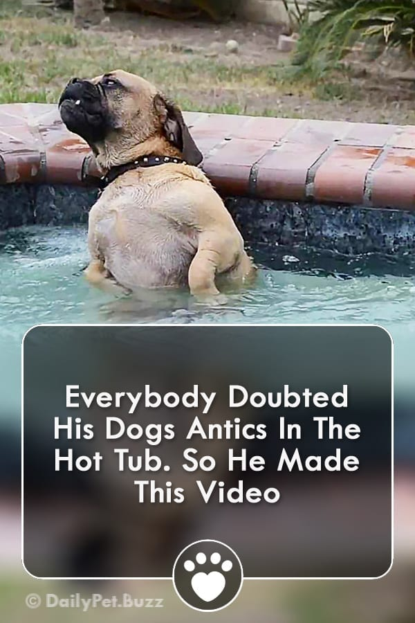 Everybody Doubted His Dogs Antics In The Hot Tub. So He Made This Video
