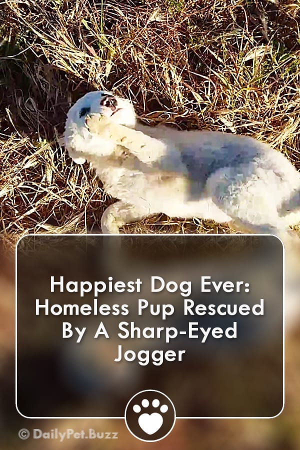 Happiest Dog Ever: Homeless Pup Rescued By A Sharp-Eyed Jogger
